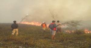 Forest fire near our site.