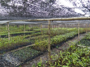5000 tree saplings have been prepared in our tree nursery