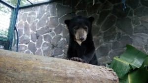 Jalou the Baby Bear