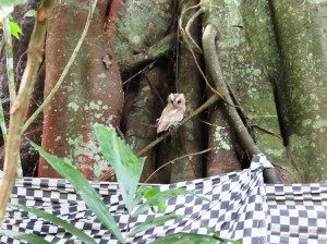 The owl is now part of the temple.